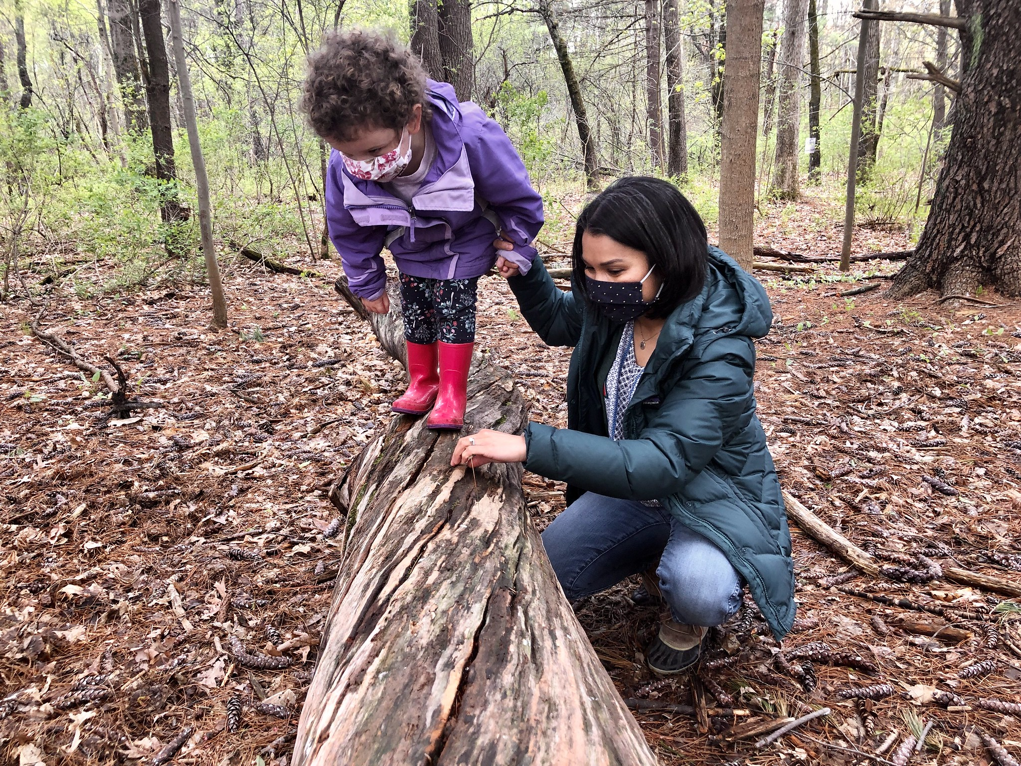 parents and toddler explore the forest